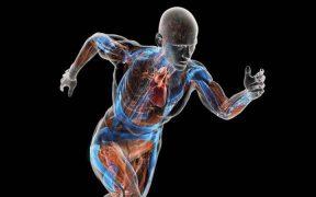 test összetétele