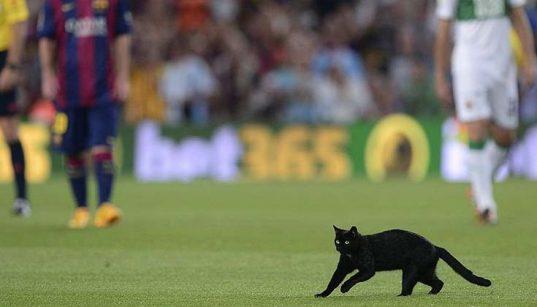 babona: fekete macska a pályán